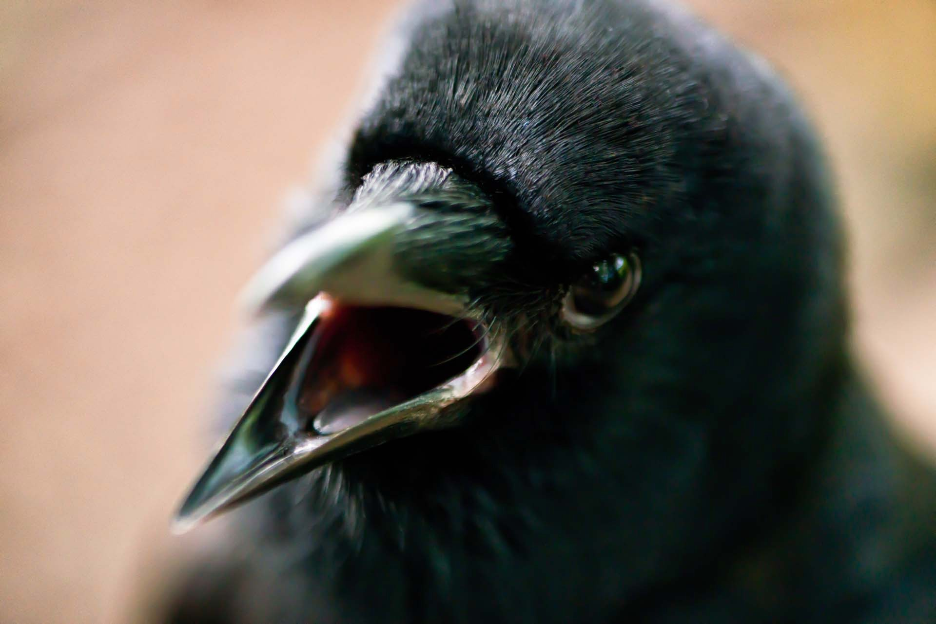 Birds: Real or Imagined