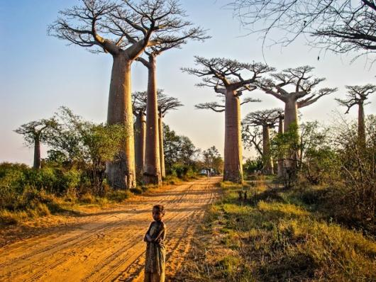 Irany_Judi_2Avenue of Baobabs
