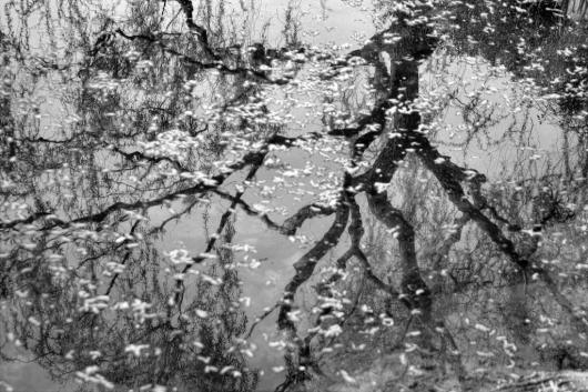 Flicek_Michael_2_Reflected Tree, Fallen Blossoms, Shanghai