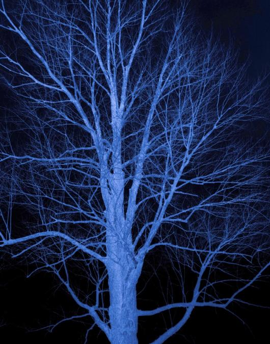 Griffith_Susan_1Blue Tree.jpg
