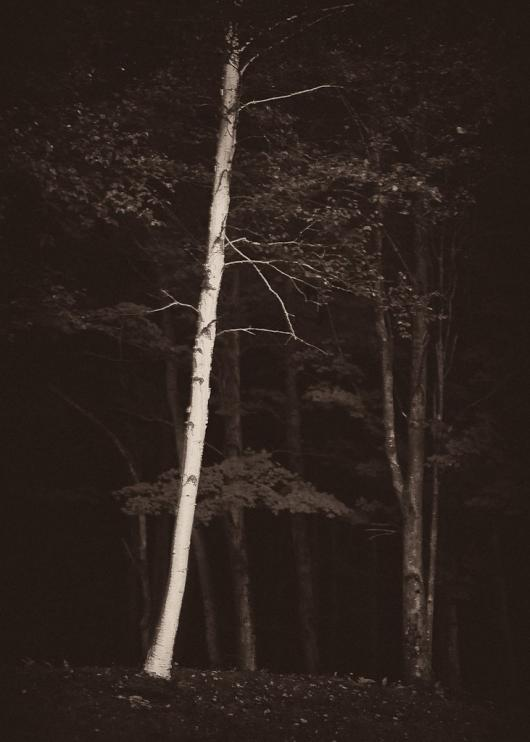 Lieber_Erik_2Lonely_Birch
