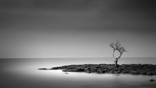 CHAI_JEFFLIN_1LONELY TREE