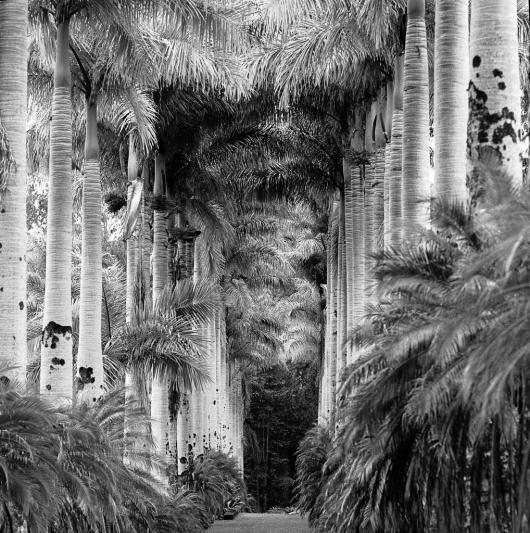 Huppert_Evy_2Royal Palms, Hawai'i