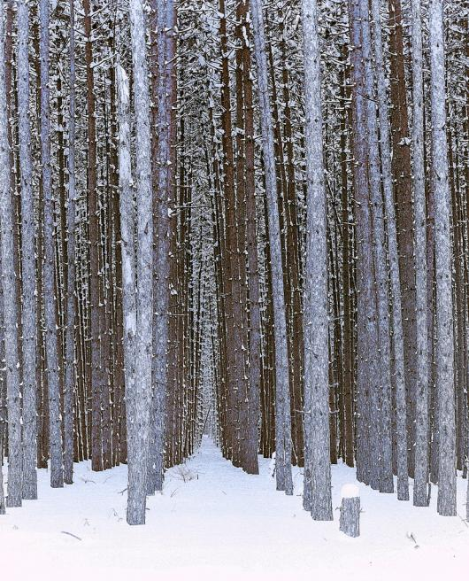 Ries_Edward_8-Winter-Forest