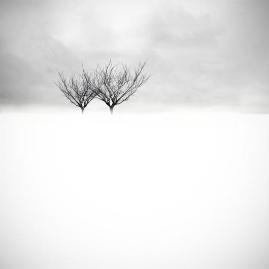 Ward_Marc_3.TwoTrees