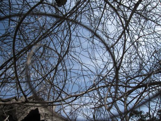 bashan_drora_20untitled_branches