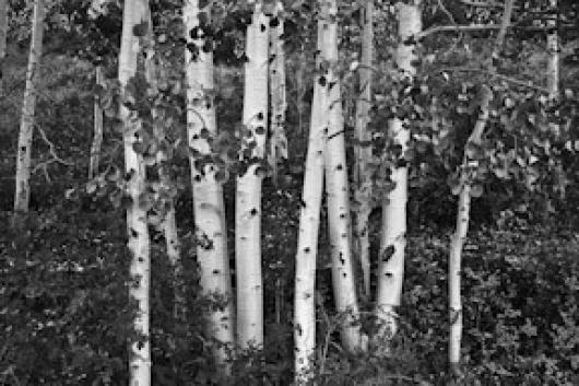 Johnson_Bob_2Aspens