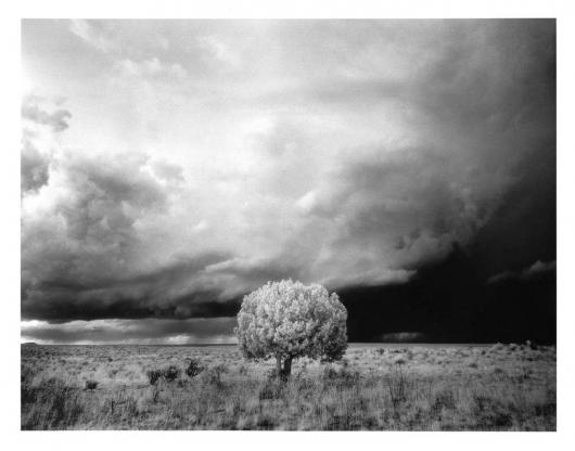 Miner_Michael_5Tree_and_Storm